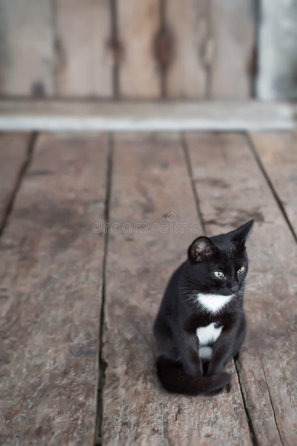 Katze lizenzfreie stockfotografie
