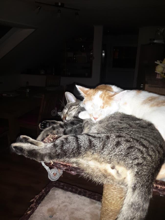 Katze arkivbild