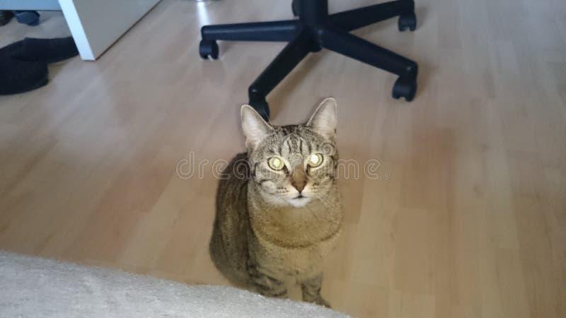 Katze 免版税库存照片