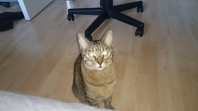 Katze 免版税图库摄影