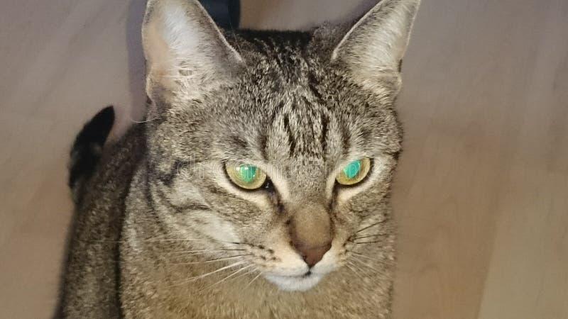Katze 库存图片