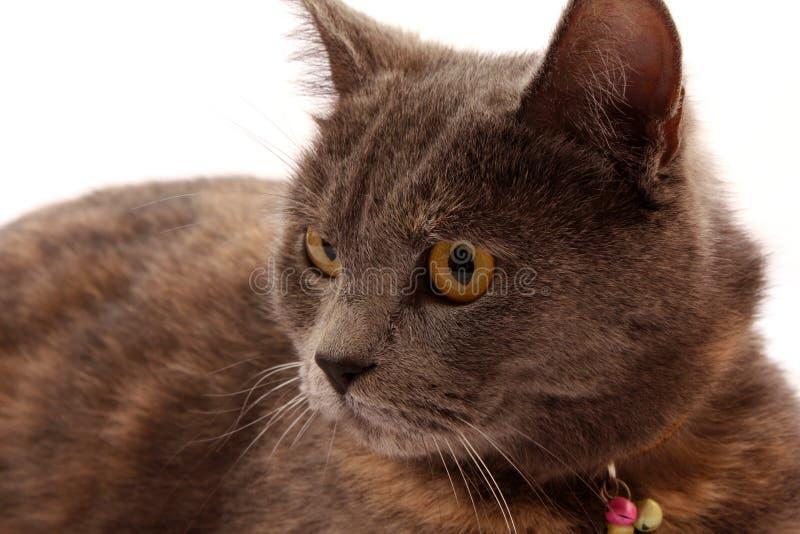 Download Katze stockbild. Bild von wekzeugspritze, pelz, freundschaft - 9095261