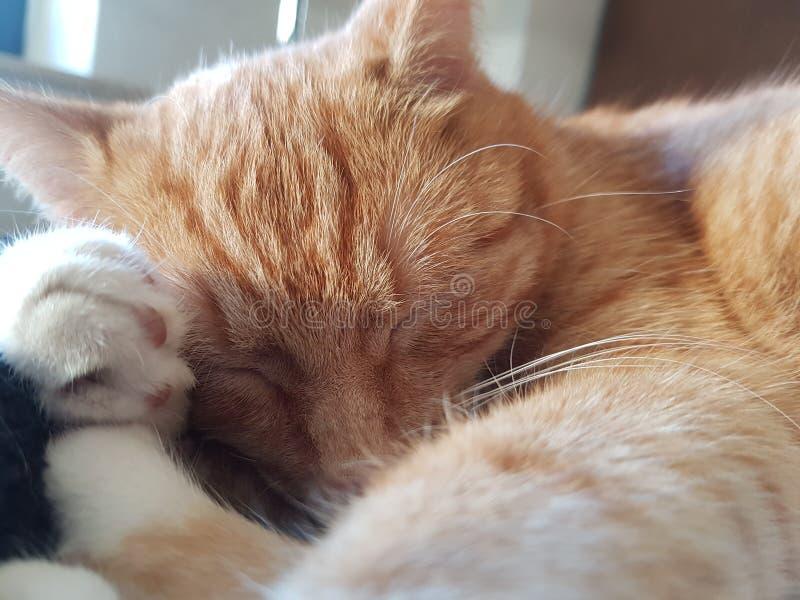 Katze fotos de archivo libres de regalías