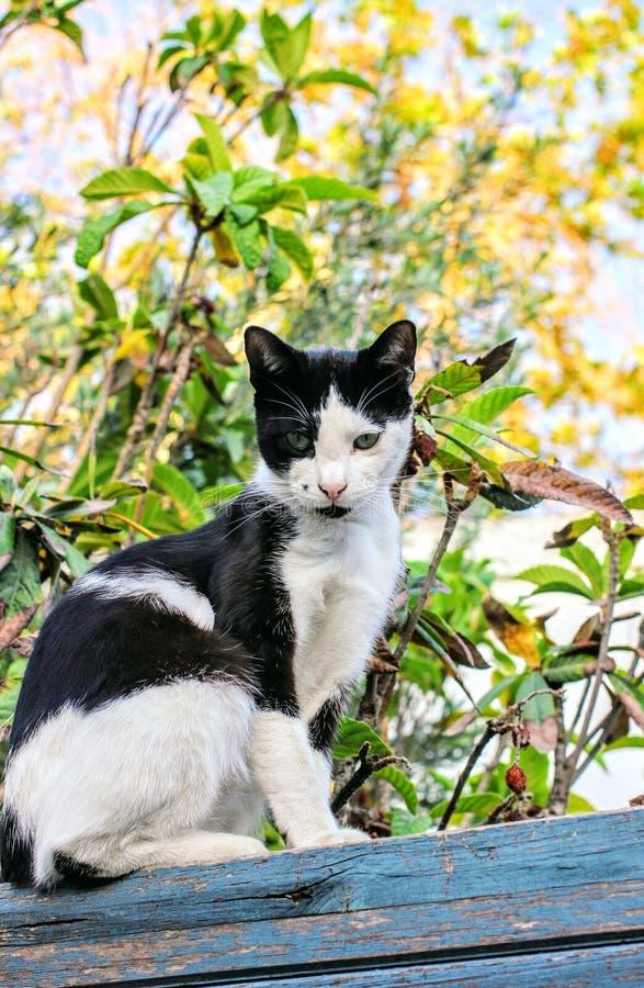 Katze auf Blau lizenzfreies stockfoto