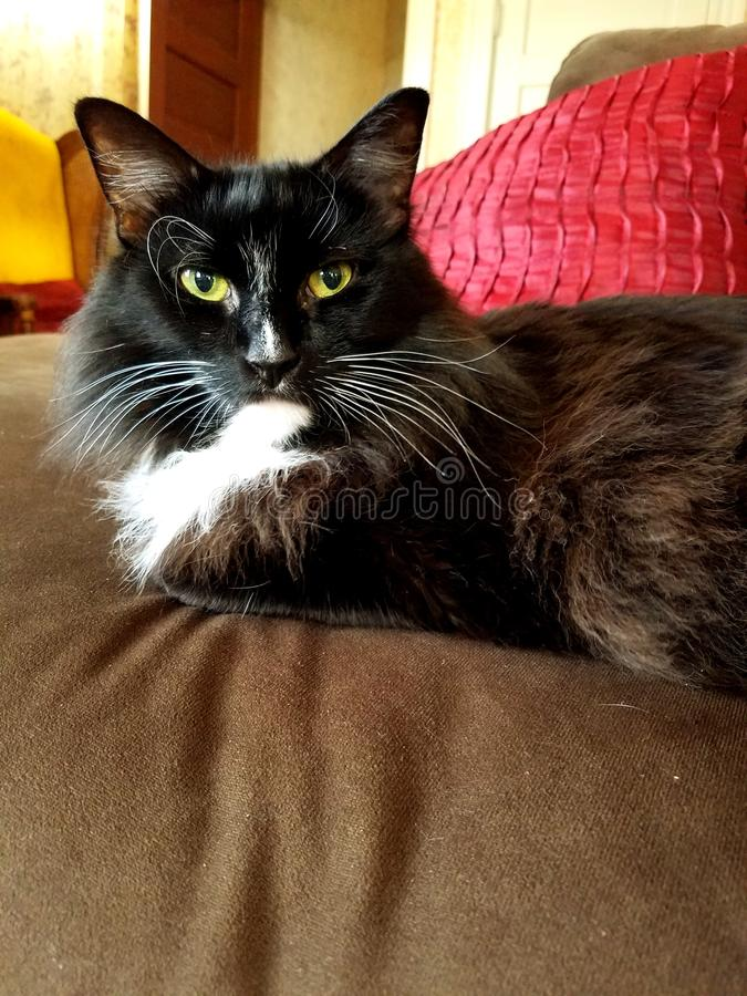 Katze auf Couch lizenzfreie stockbilder