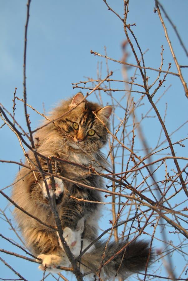 Katze auf dem Baum stockfotos