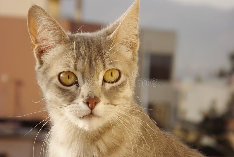 Katze auf dem Dach, das in Richtung der Unendlichkeit blickt lizenzfreie stockfotos
