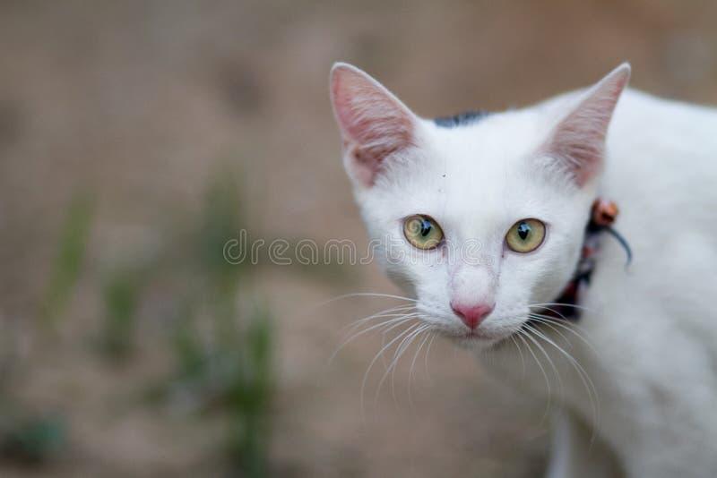 Katze auf dem Gebiet stockbilder