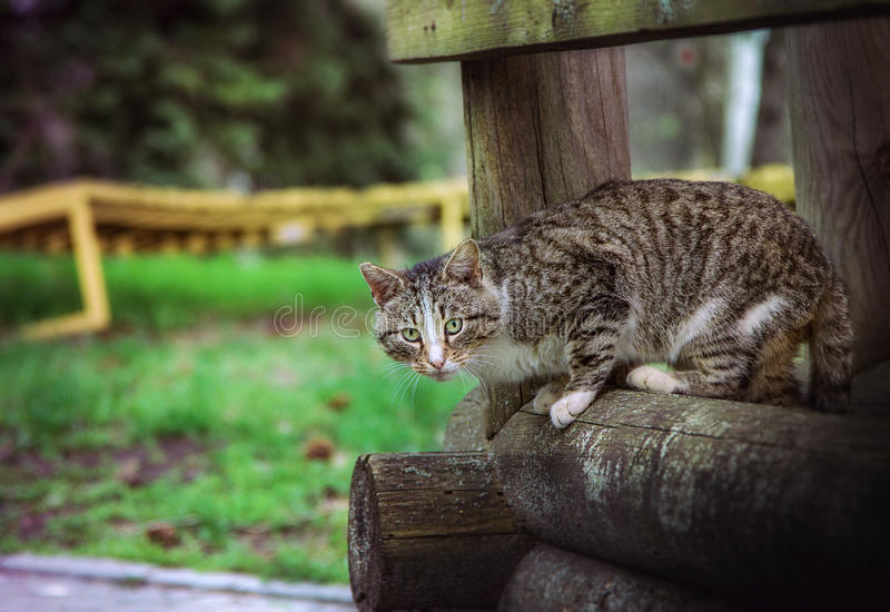 Katze auf dem Holzbalken stockfotos