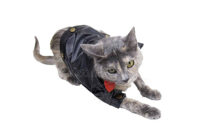 Katze auf dem Prowl stockbild