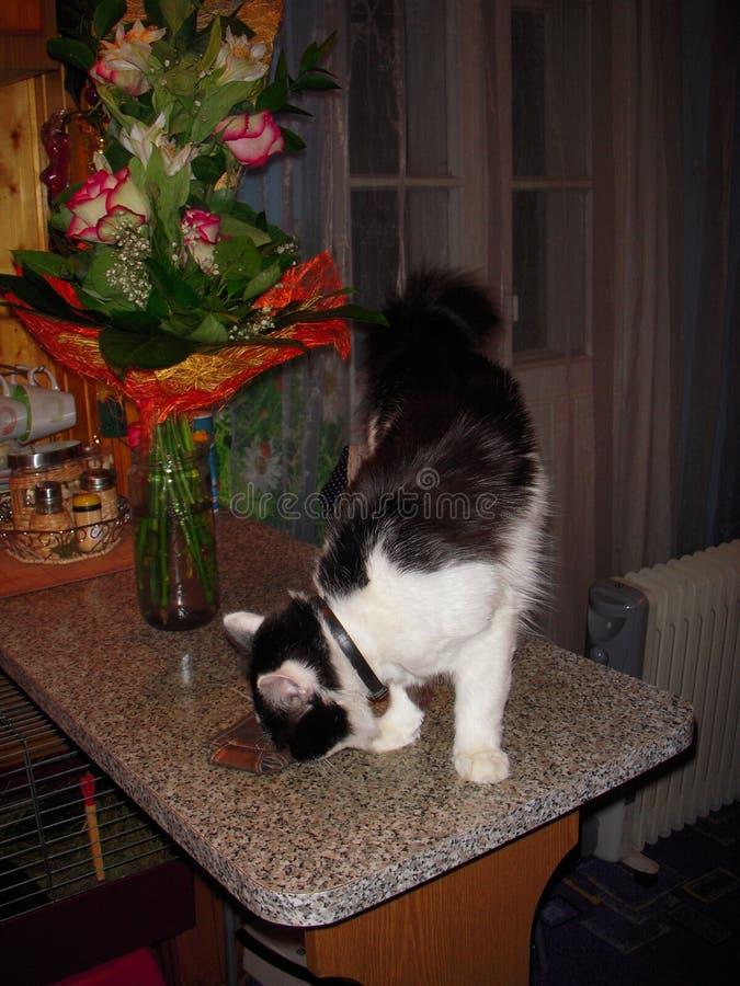 Katze auf dem Tisch stockfoto