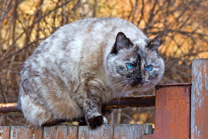 Katze auf dem Zaun lizenzfreie stockbilder