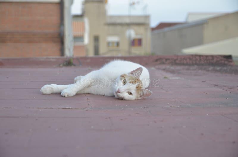 Katze auf der Dachspitze Sie aufpassend lizenzfreie stockfotos