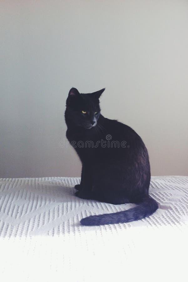 Katze auf der dunklen Seite lizenzfreies stockfoto