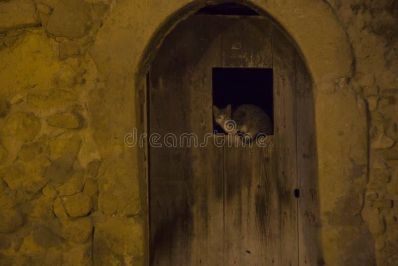 Katze auf der lophole Tür lizenzfreies stockfoto