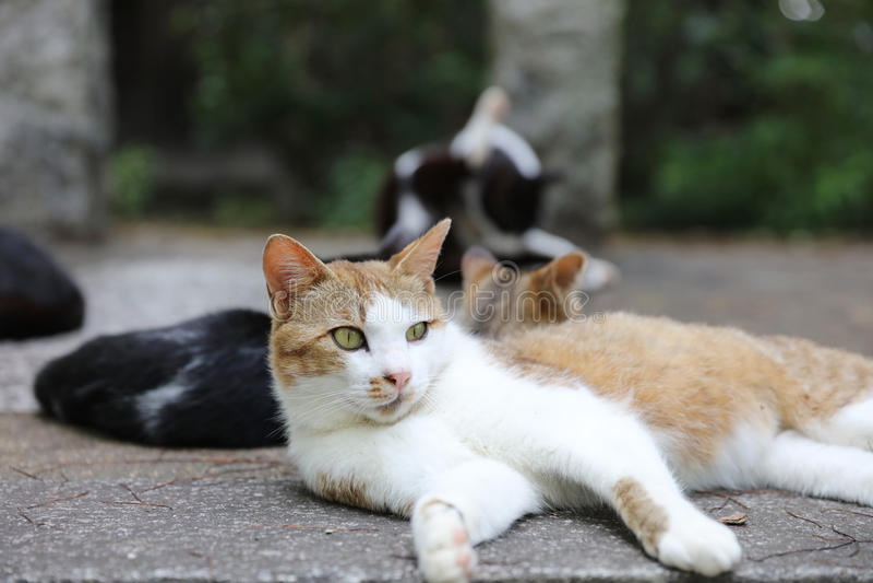 Katze auf der Straße, Japan lizenzfreies stockfoto
