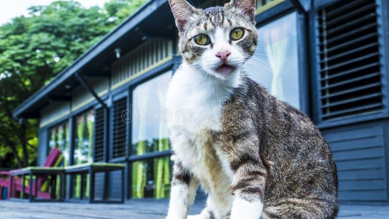 Katze auf der Straße mit nettem Hintergrund lizenzfreie stockfotografie