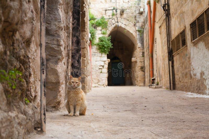 Katze auf der Straße in Nablus Israel Stone Road Arch Background lizenzfreies stockbild