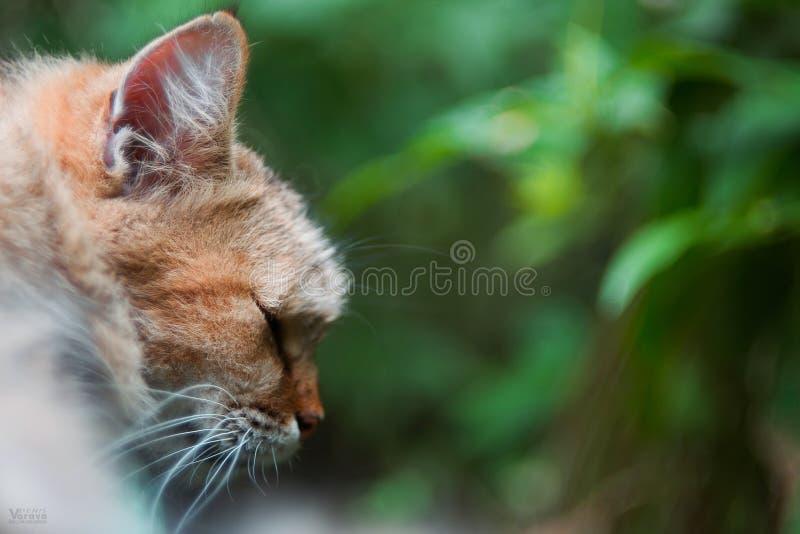 Katze auf der Straße Straßenkatze lizenzfreies stockfoto
