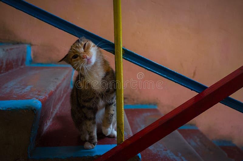Katze auf der Treppe stockfotos