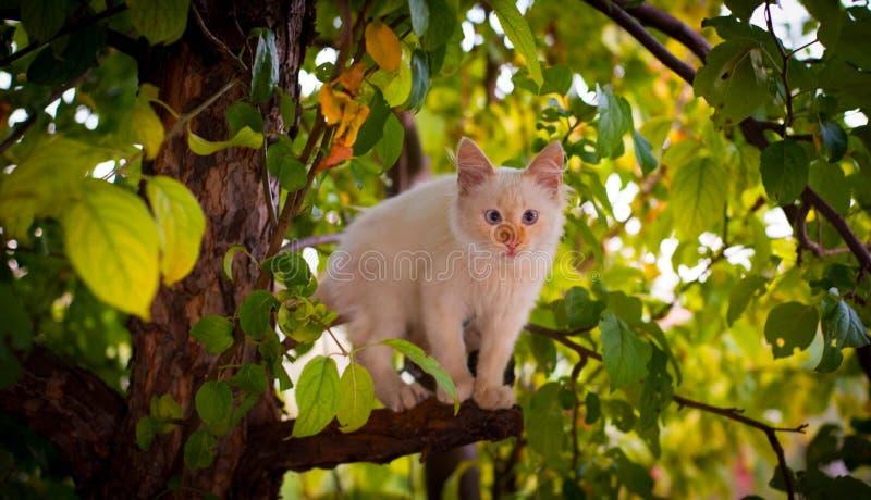 Katze auf einem Baum lizenzfreies stockfoto