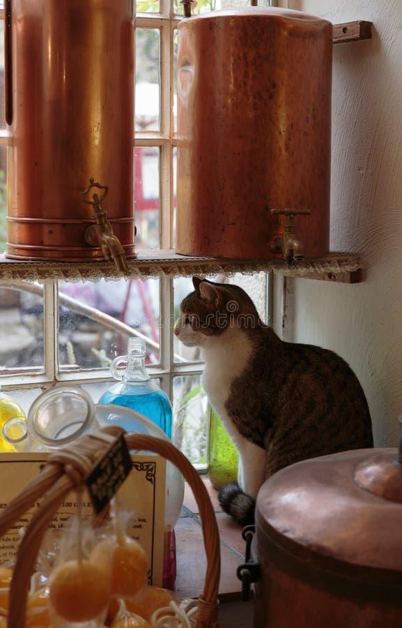 Katze auf einem Fensterbrett im alten Parfümlabor im Dorf stockfotos