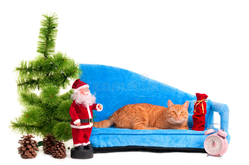 Katze auf einem Sofa lizenzfreie stockfotografie