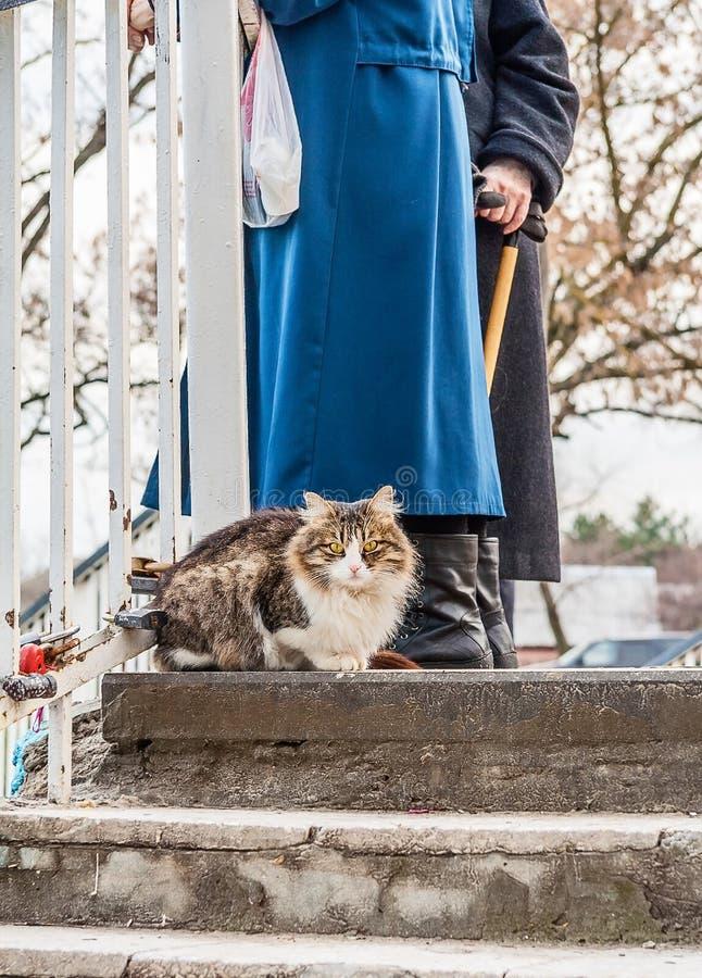 Katze auf einem Weg an einem Wintertag stockbild