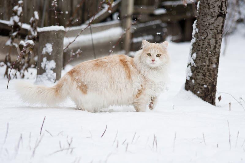Katze auf einem Winterweg lizenzfreie stockfotos
