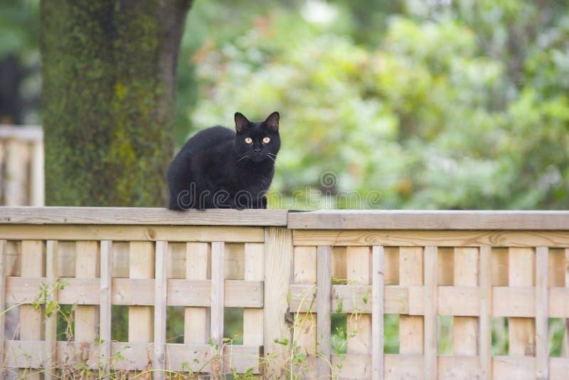 Katze auf einem Zaun lizenzfreie stockbilder