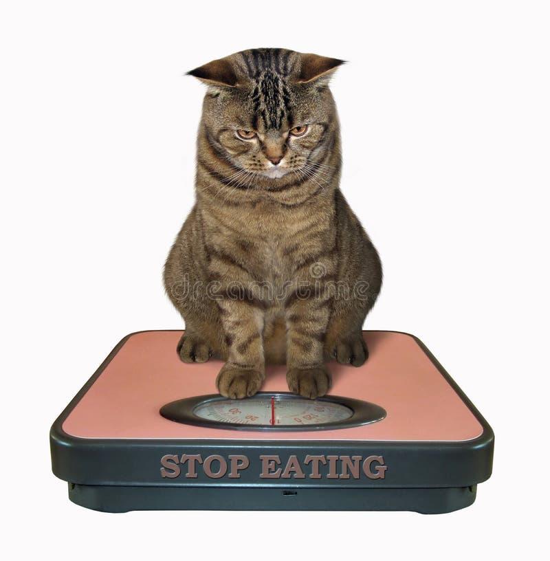 Katze auf einer Badezimmerwaage lizenzfreie stockbilder