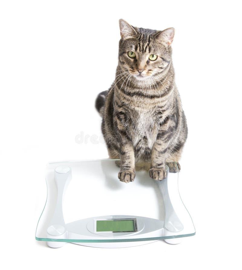 Katze und Skala lizenzfreie stockbilder