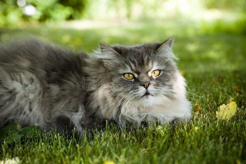 Katze auf grünem Gras lizenzfreies stockfoto