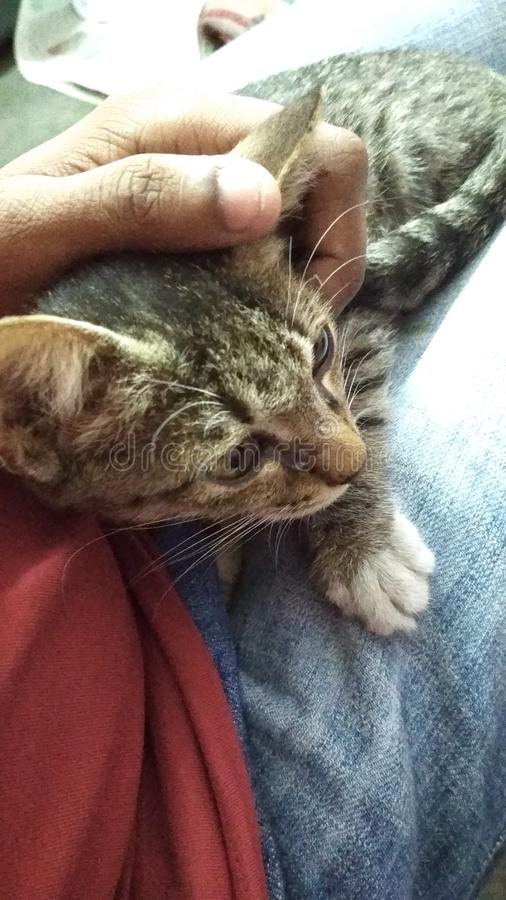 Katze auf Schoss lizenzfreie stockfotos