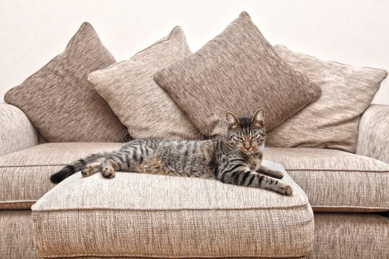 Katze auf Sofa lizenzfreie stockbilder