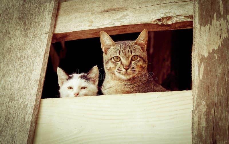 Katze auf Wand stockbilder