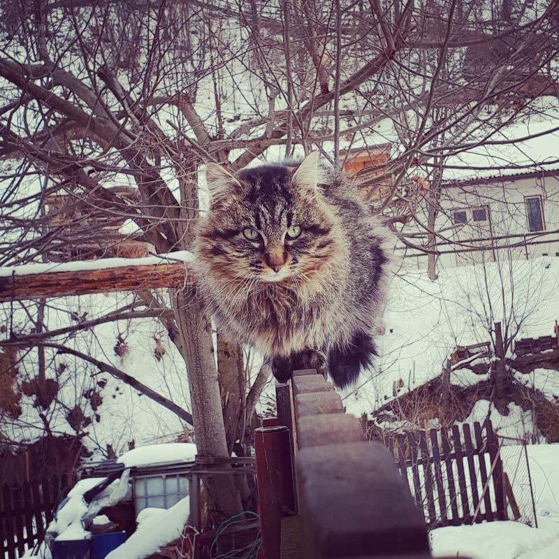 Katze auf Zaun lizenzfreie stockfotografie