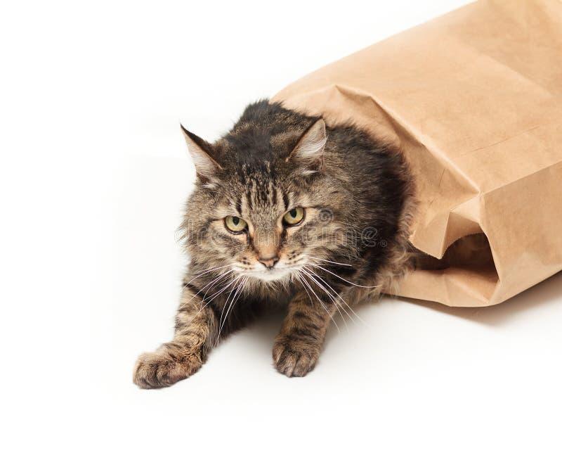 Katze aus dem Beutel heraus lizenzfreie stockbilder