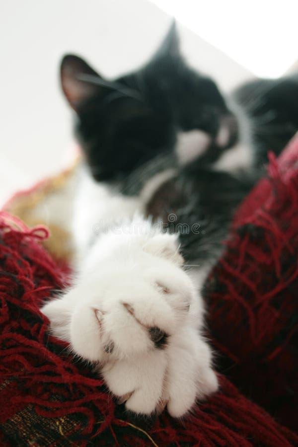 Katze ausgestreckt auf Sofa lizenzfreie stockfotografie