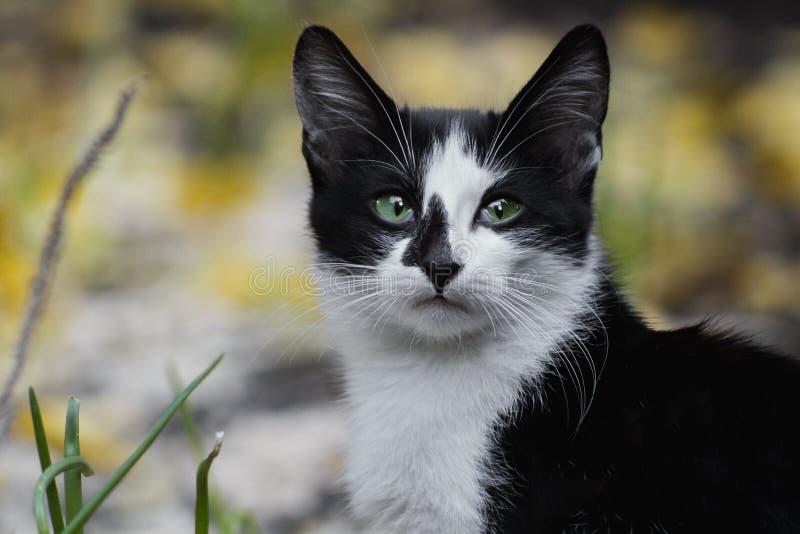 Katze, B?rte, Fauna, klein zu mittelgro?en Katzen