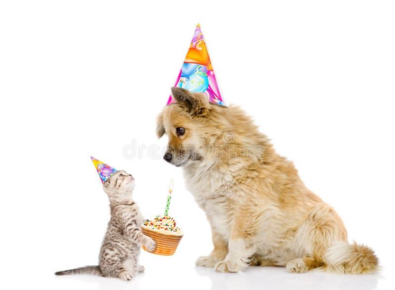 Katze beglückwünscht Hund auf seinem Geburtstag Getrennt auf weißem Hintergrund stockfotografie