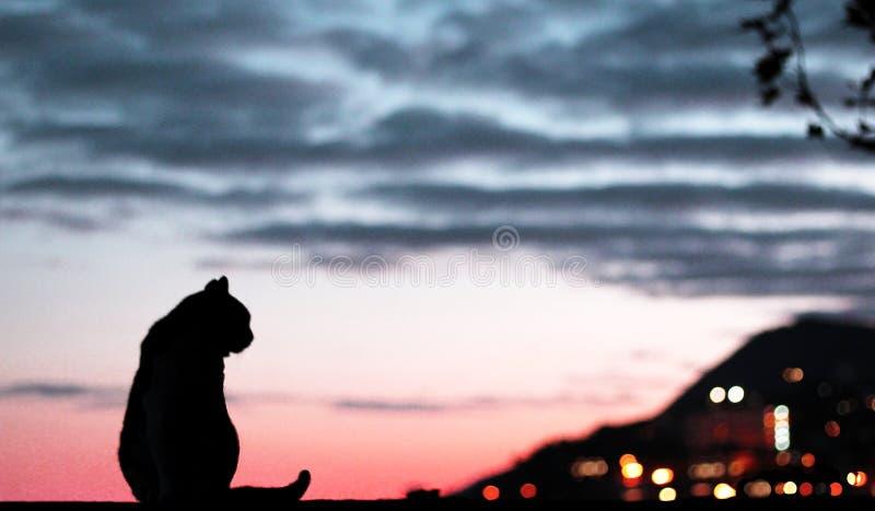 Katze bei Sonnenuntergang stockbild