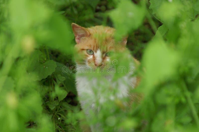 Katze beim Verstecken stockfotografie