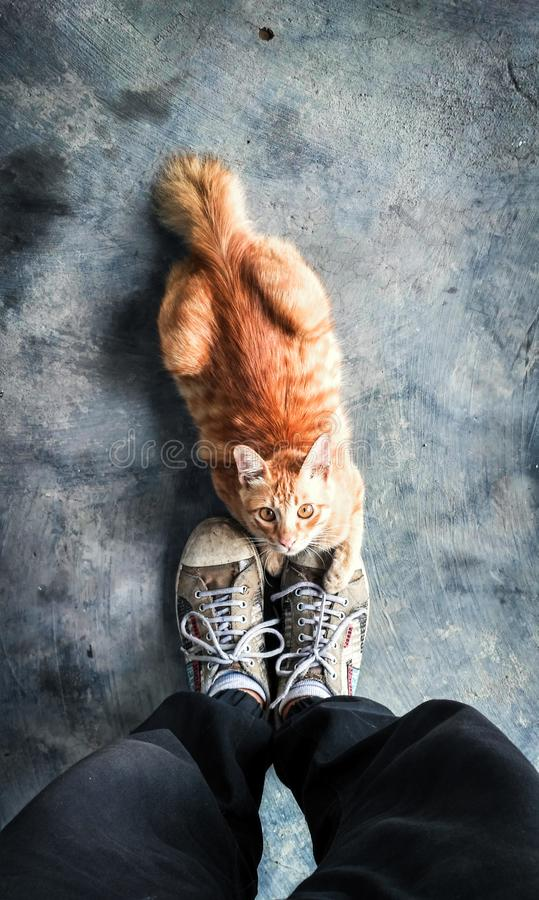 Katze betrachtet mir lizenzfreies stockbild