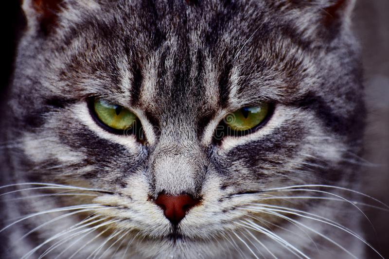 Katze betriebsbereit zum Angriff stockbilder