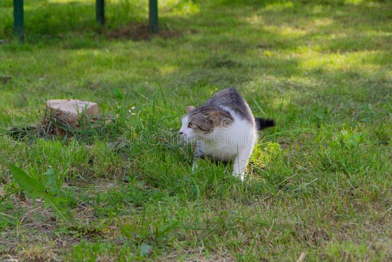 Katze betriebsbereit zum Angriff stockfotos