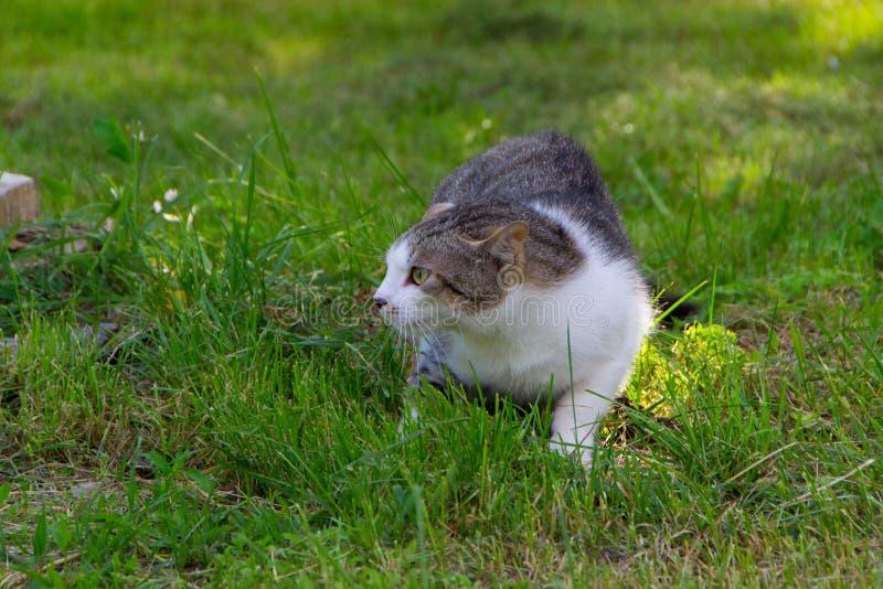 Katze betriebsbereit zum Angriff stockfotografie