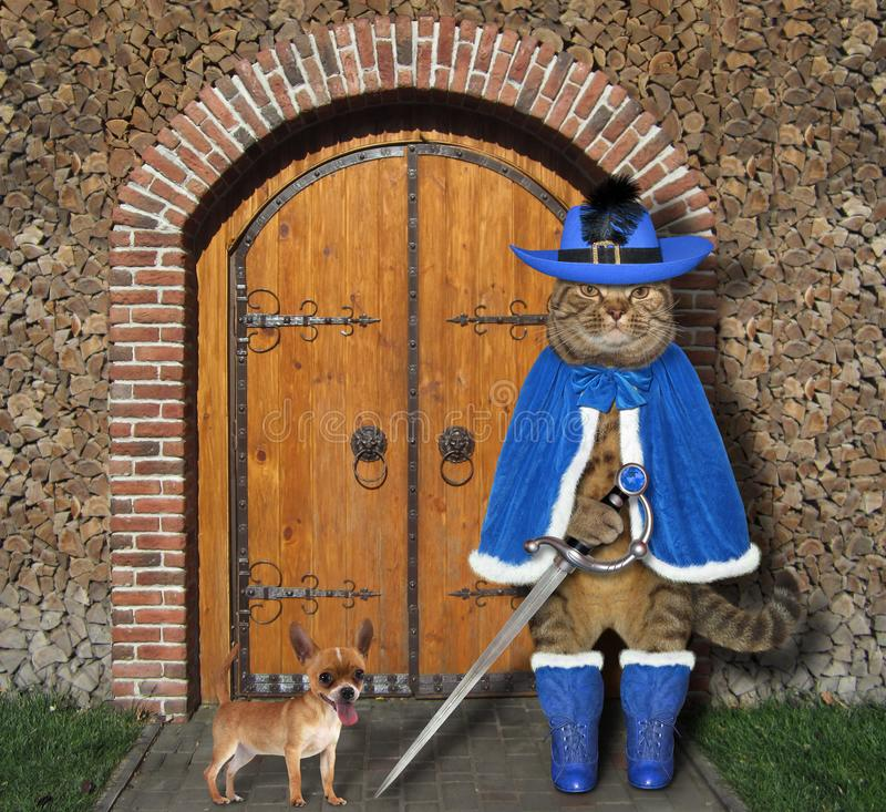 Hund In Blauer Manschette Mit Pistole Stockbild Bild von