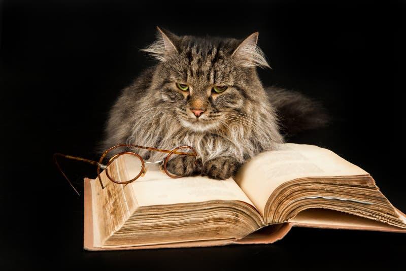 Katze, Buch und Gläser lizenzfreie stockbilder