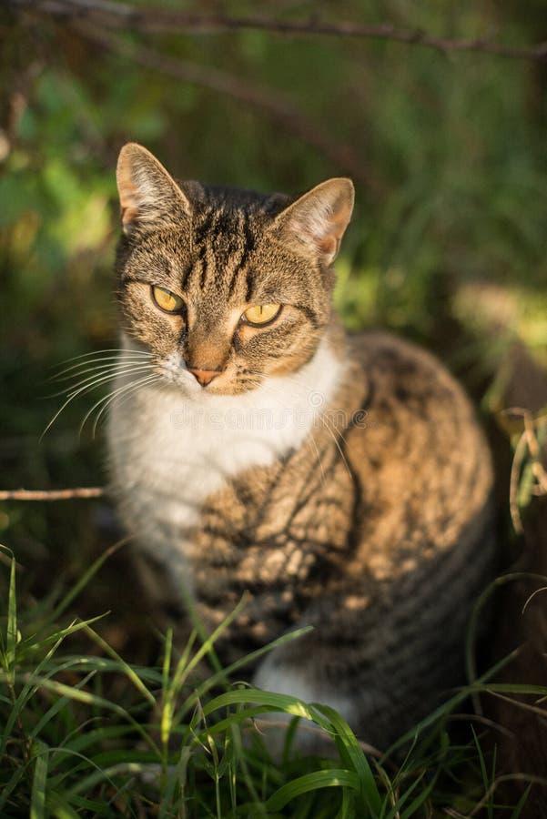 Katze in den Büschen lizenzfreies stockbild